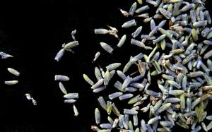4-lavender